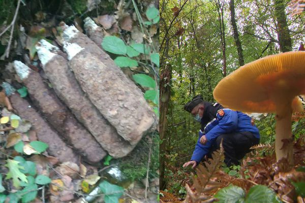 Les gendarmes ont découvert neuf obus de la seconde guerre mondiale entassés en forêt d'Andaine, dans l'Orne. Et ils ne sont pas les seuls.