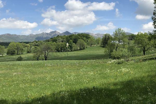 Les prairies du Puy-de-Dôme ont un rôle à jouer dans la qualité du Saint-Nectaire AOP.