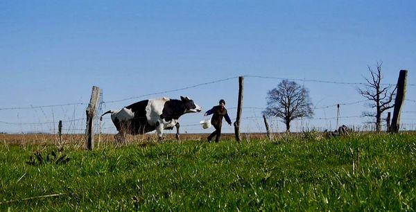 Sylvaine et sa vache de compagnie