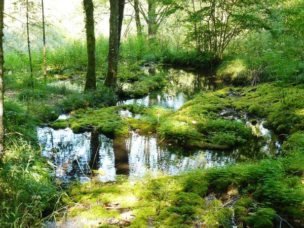 Le Parc National de Forêts est une destination ressourcement à moins de trois heures de Paris.