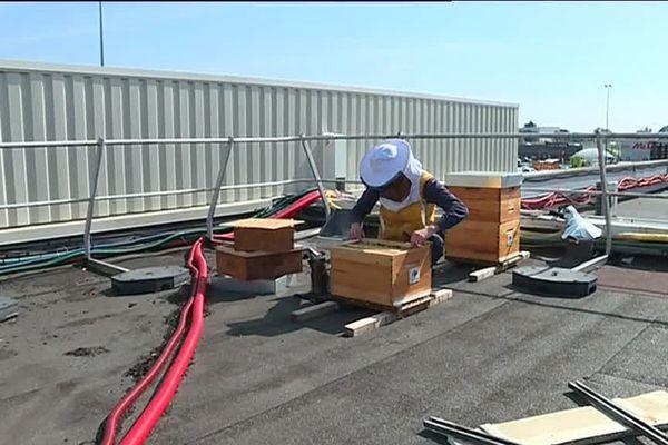 Jason Garitan de la société Uibie a installé plusieurs ruches sur le toit de cet hypermarché situé à Condé-sur-Sarthe