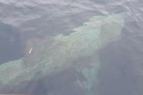 Un requin pèlerin observé dans les Bouches de Bonifacio (Corse du Sud)