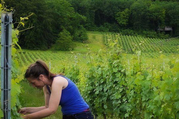 Eve Maurice dans ses vignes, en arrière plan la cabane Folies