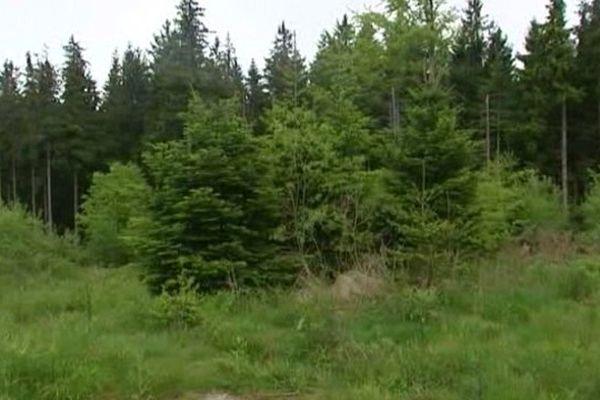 2,8 hectares de forêt au col du Bonhomme seront peut-être défrichés.