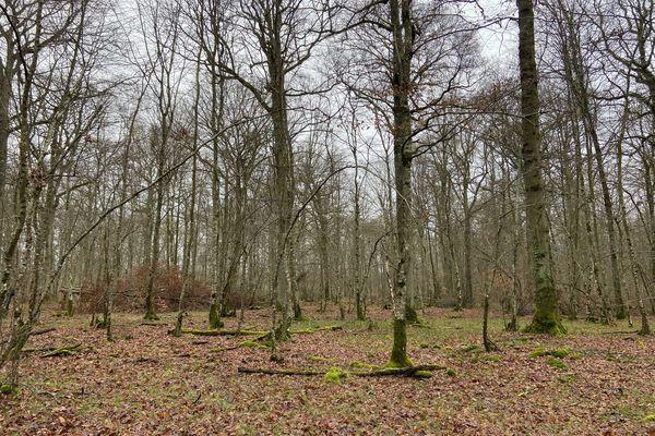 Les chênes centenaires de la forêt de Conches Breteuil serviront à la reconstruction de la flèche de Notre Dame de Paris.