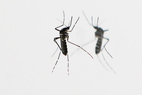 Des opérations de démoustication vont avoir lieu à Fargues-sur-Ourbise  pour détruire les éventuelles larves et gîtes de moustique-tigre