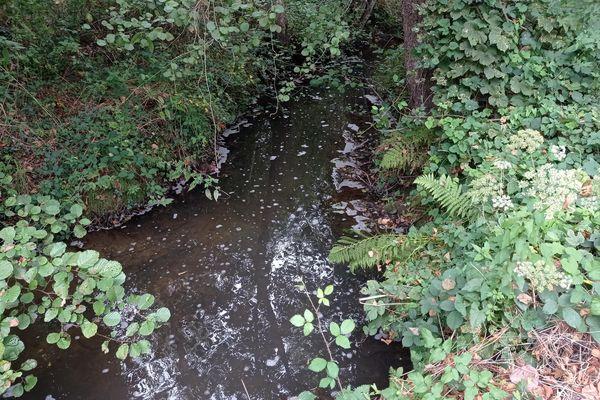 La pollution de la rivière de Quincampoix a été constatée le 10 septembre par les riverains, mais la mairie a déclaré que la station d'épuration avait signalé le problème dès le 30 août.
