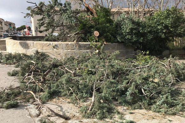 Carcassonne - des arbres déracinés en ville - 2 mars 2020.