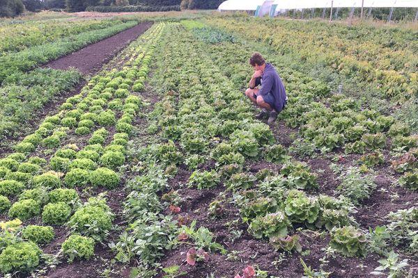 La pluie est revenue en Auvergne en septembre, mais elle ne suffit pas à panser les dégâts causés par la sécheresse estivale.