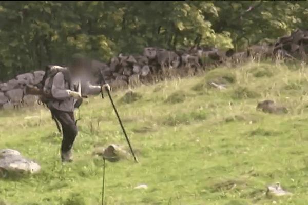 Les gardes-chasses ont été chargés d'observer les bouquetins avant l'abattage massif - 22 septembre 2015
