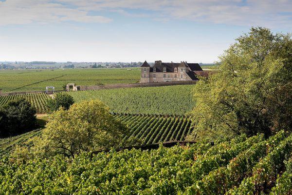 Les vignes à Chambolle-Musigny (Côte-d'Or) en septembre 2017.