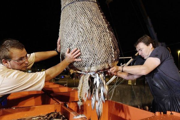 """Des pêcheurs de sardines à Quiberon, en septembre 2014. Cette espèce est concernée par le """"zéro rejet"""" en mer."""