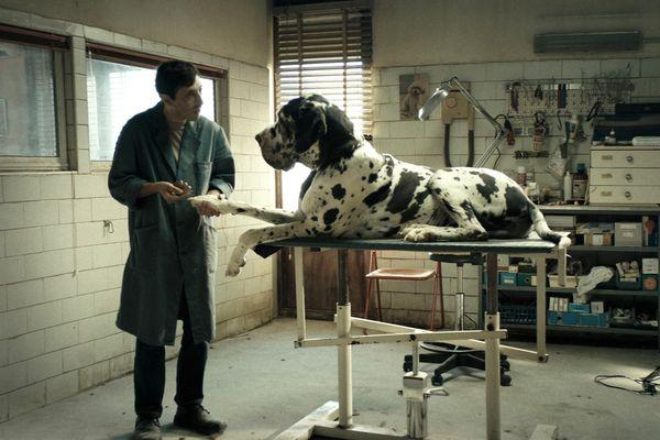 """Le film """"Dogman"""" voit ses chiens récompensés par la Palm Dog"""