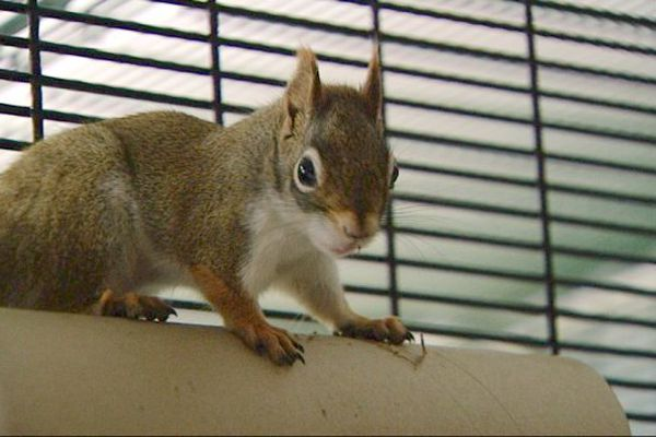 Titi l'écureuil, un des pensionnaires de la Cabane d'Ani'nomade