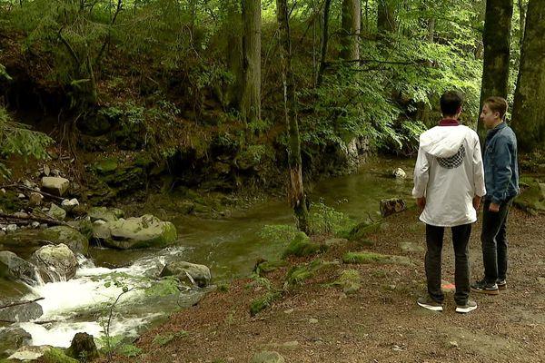 Une parcelle de forêt est menacée par un projet de route à La Clusaz, en Haute-Savoie.