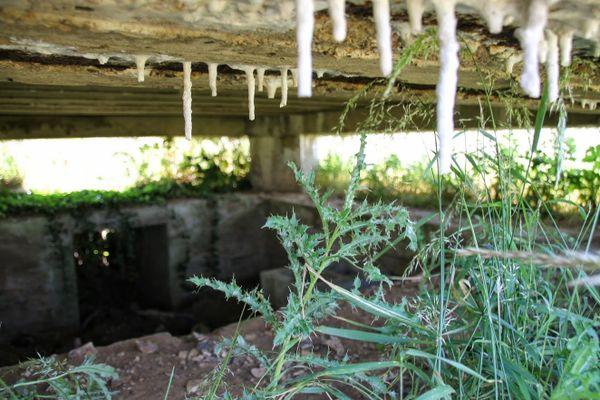 L'intérieur de ce bunker de l'ex-aérodrome d'Audembert est désormais envahi par la végétation.
