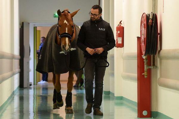 Le cheval et son dresseur étaient lundi à l'hôpital de Calais.