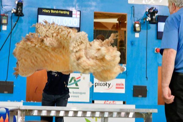Jeudi 4 juillet 2019 - Mondial tonte moutons Le Dorat -