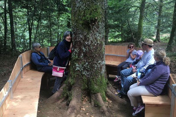 Au Mont-Dore, dans le Puy-de-Dôme, les promeneurs peuvent prendre des bains de forêt, grâce à ces 5 spas forestiers.