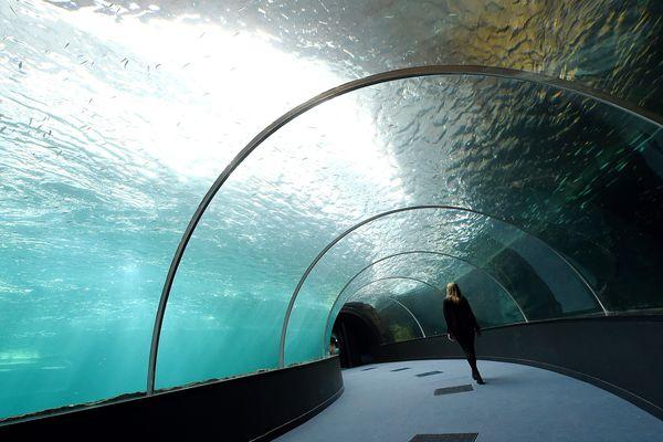 Long de 60 m, large de 30 m et profond de 8 m, le nouveau bassin de Nausicaà pourra contenir entre 22.000 et 25.000 espèces marines différentes.