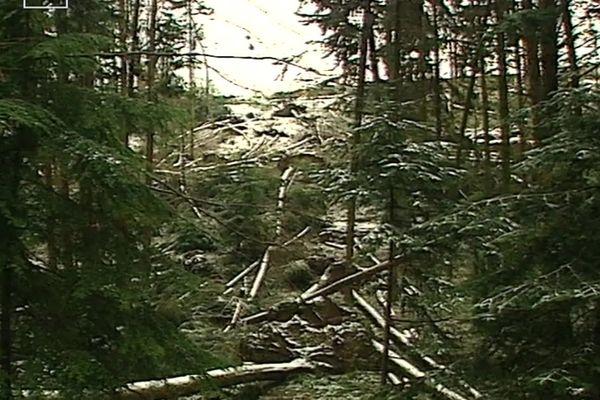L'arboretum de la Jonchère a été fortement endommagé par la tempête du siècle de 1999.