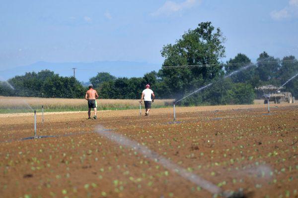 Travail illégal dans les champs