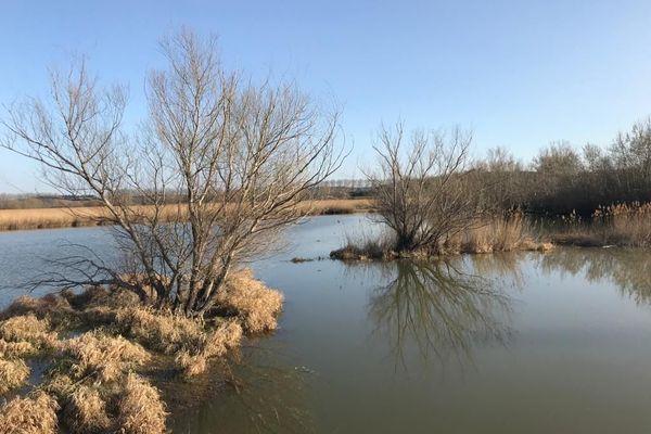L'étang de La Capelle, près d'Uzès dans le Gard : comme un morceau de Camargue en pleine garrigue.