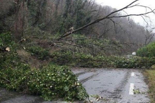 Des arbres sont tombés en travers de plusieurs routes de l'Ariège, le 13 décembre 2019