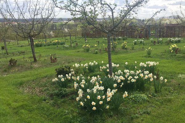 Les Jardins fruitiers de Laquenexy au printemps
