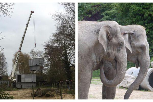 Ces deux rescapées du cirque vont partir pour la Belgique début décembre