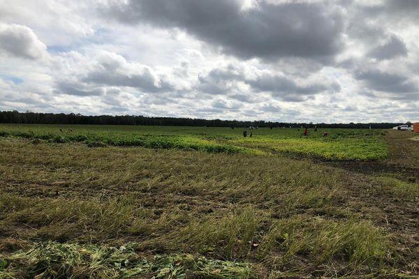 Des cueilleurs du samedi dans le champ d'Emmanuel Calers.