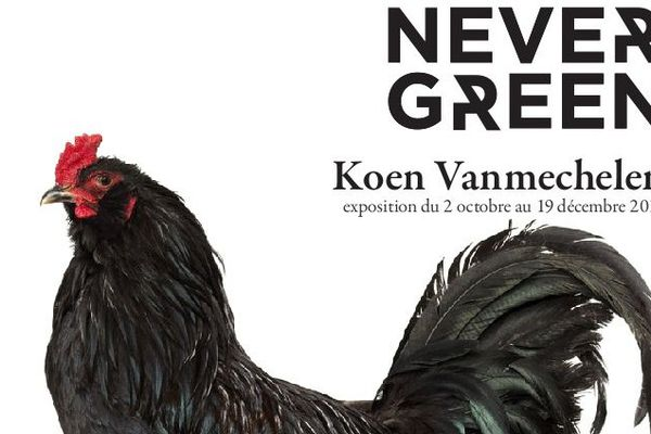 """L'exposition """"Never Green"""" à RURART au lycée agricole de Venours."""