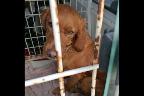 Un des chiens saisis en Sud Gironde