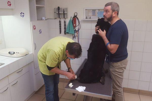 Pour respecter les règles sanitaires, les soins vétérinaires  en ville sont désormais limités au curatif.