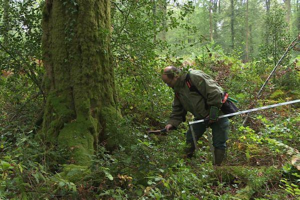 Les forestiers inspectent les hêtres avant de décider de leur sort