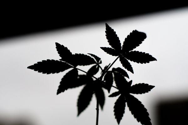 Le rappeur avait fait la promotion d'un point de vente de cannabis, qui a connu un large succès via des publicités sur les réseaux sociaux (illustration).