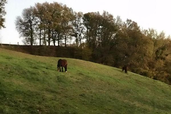 Le cheval a été retrouvé à proximité de ce pré situé sur la commune de Busque dans le Tarn
