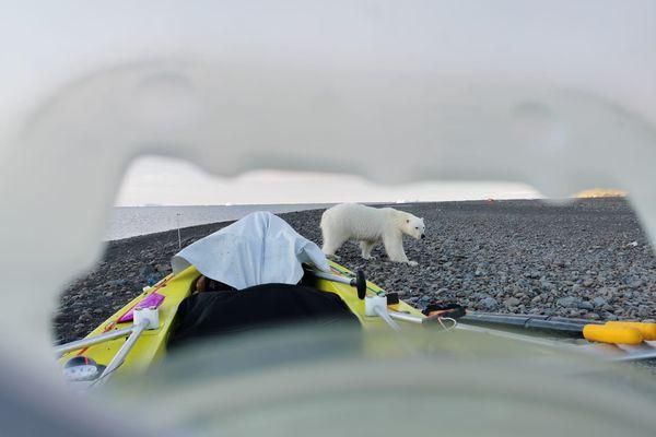 Un ours polaire vu par Vincent Grison