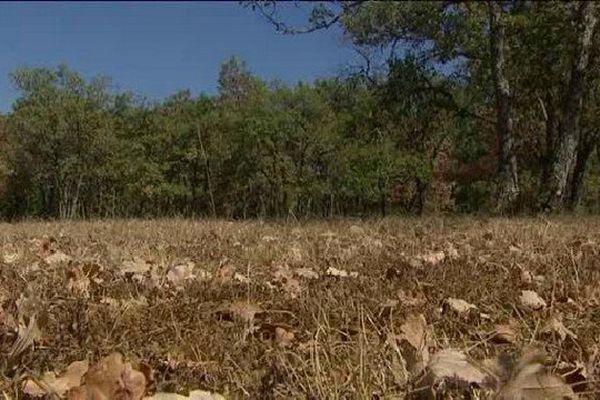 La végétation est touchée de plein fouet par la sécheresse