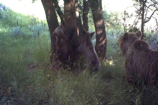 Caramelles accompagnée de ses deux oursons en 2014