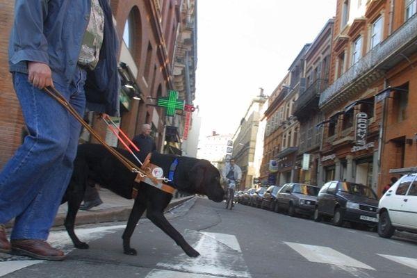 Un chien guide d'aveugle en formation dans les rues de Toulouse