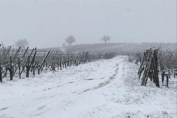 Le vignoble est sous la neige à Mittelwihr.