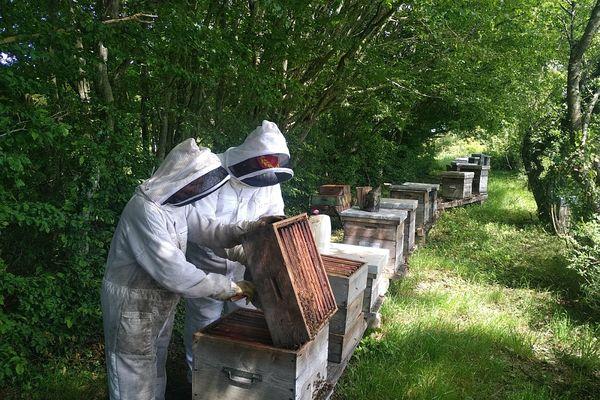 Marina Losdat possède 150 ruches, dans les bois du hameau de Cornantier.