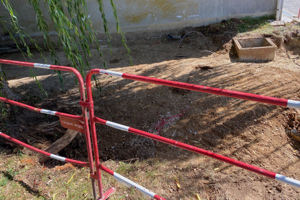 Les travaux avaient commencé pour mettre à jour les racines de l'arbre.