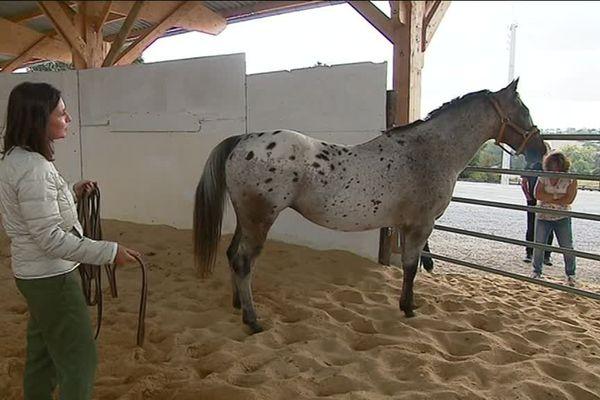Stage d'équicoaching : quand le cheval vous ignore !