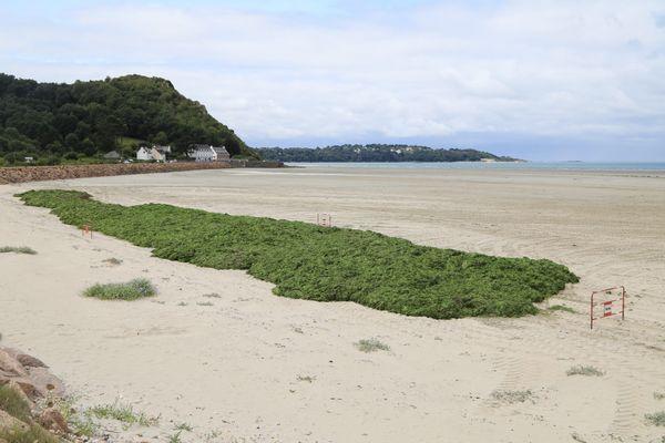 Ramassage d'algues vertes sur la plage de Saint-Michel-en-Grève en août 2021