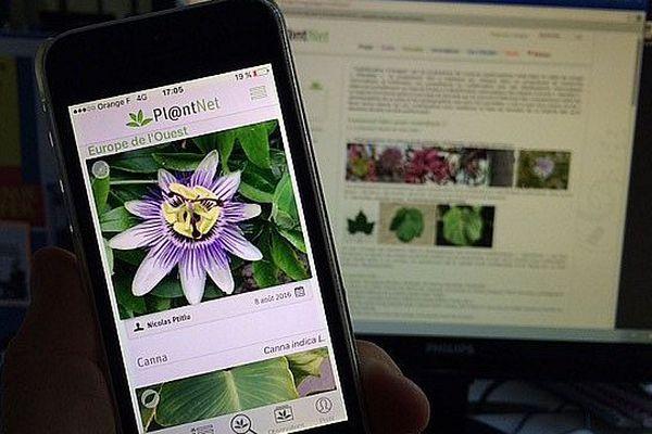 Les contributeurs de pl@ntnet envoient des photos du monde entier.