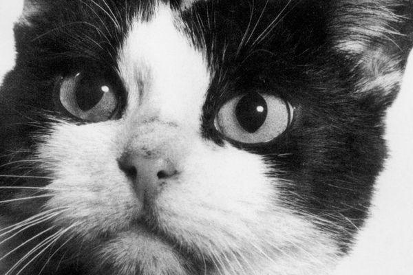 Photographie souvenir de Félicette prise à son retour sur terre