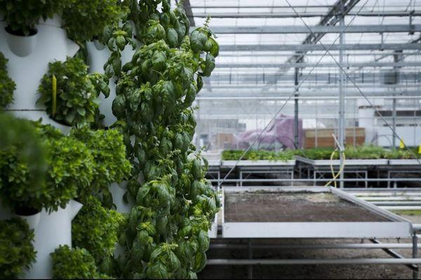 Une exploitation d'agriculture urbaine, à Saint-Nom-la-Bretèche, dans les Yvelines.