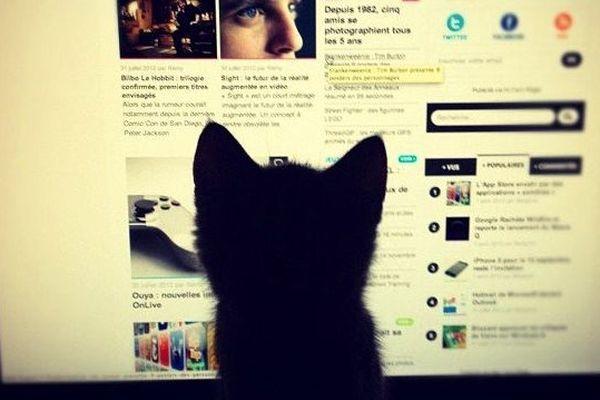Chat vendéen scotché au web 2.0